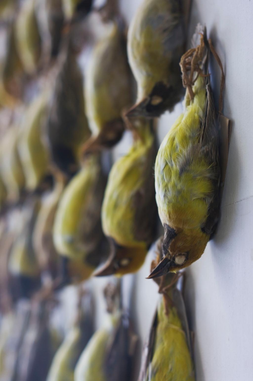 birds-better