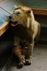 lion-stuffed