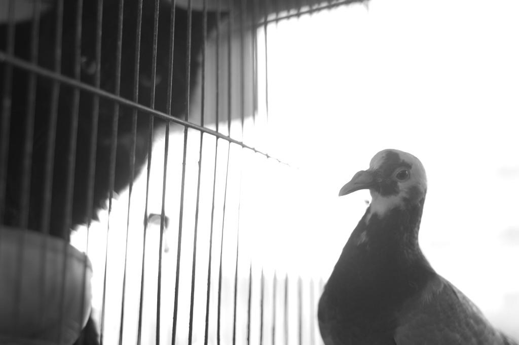 bird,cat,photography, cairo, souk al gumaa