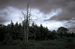 stormy-2