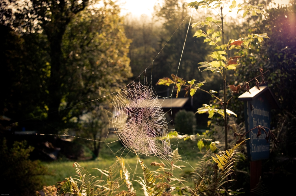 spiderweb, Germany, Bavaria, morning, dew, photography