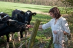 photography,cows,Nadia,field,nature,wildlife